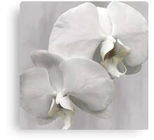 SHABBY CHIC ORCHIDS Canvas Print