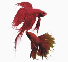 Betta Splendens ;Siamese fighting Fish.  by Alex Gardiner