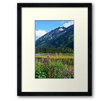 July at Tern Lake II Framed Print