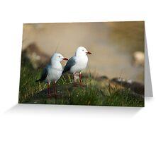 Seagull Portraite  Greeting Card