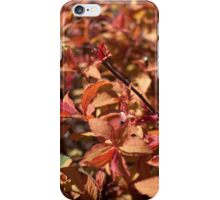 spring bush with red, yellow color leaves. iPhone Case/Skin