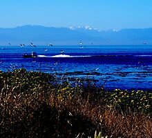 Clover Point by davidandmandy