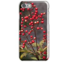 spring bush with red fruits. plant nature photography. iPhone Case/Skin