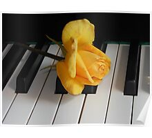 Golden Rose on Piano Keyboard Poster