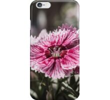 Sweet William iPhone Case/Skin