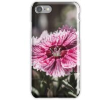 Sweet William iPhone Case/Skin