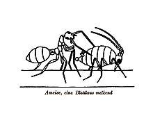 Ant & Aphid Photographic Print