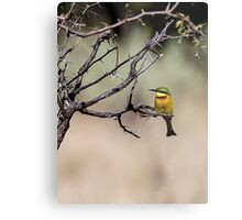 Swallow-tailed Bee Eater Metal Print