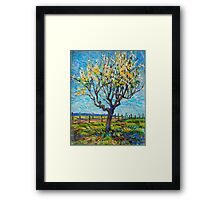 Apricot Tree Framed Print