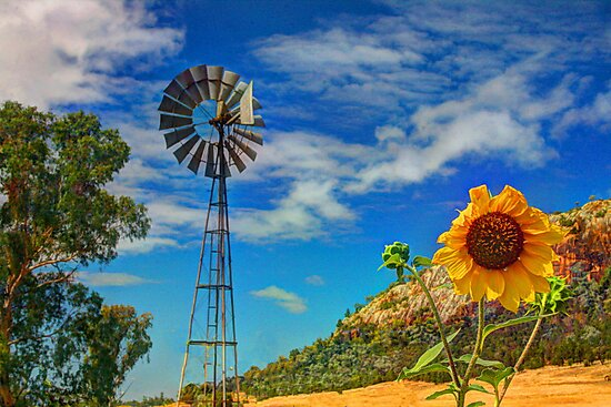 Country Sunshine by Michael Matthews