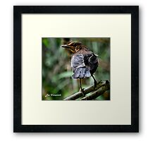 Common; Who Me! - PA Framed Print