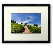 Standing in the green tea field Framed Print