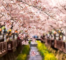 Colors of Spring by aaronchoi
