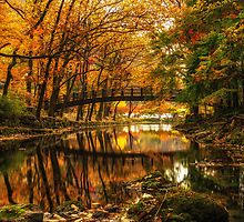 Fall reflections by aaronchoi