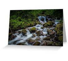 Jungle Stream Greeting Card