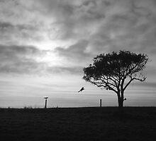 Darkness flies swiftly by Penny Kittel