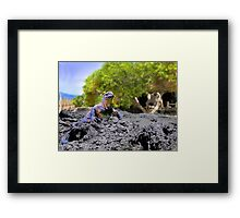 Dozing In The Galapagos Sun Framed Print