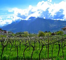 Vineyard view by gprince