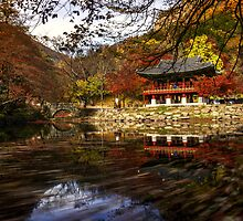 Leaves dancing on the temple by aaronchoi