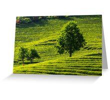 Boseong Green Tea Greeting Card