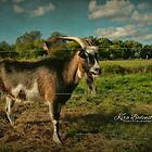 Billy the goat by © Kira Bodensted