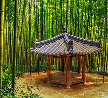 Resting among the bamboo forest by aaronchoi