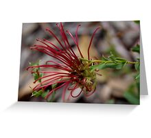 Grevillea phanerophlebia Greeting Card