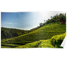 Endless green tea fields Poster