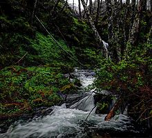 You Give Me Joy by Charles & Patricia   Harkins ~ Picture Oregon