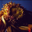 Investigation of Dried Gerbera by mewalsh
