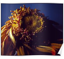 Investigation of Dried Gerbera Poster