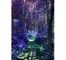 Path in the Enchanting Forest Photographic Print