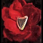 Rose Harp by Beth Stockdell