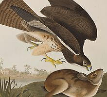 Illustration from 'Birds of America' by Bridgeman Art Library
