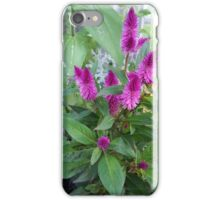 Celosia Flower iPhone Case/Skin