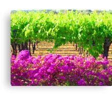 Vineyard with Bouganvillea Canvas Print
