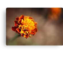 Marigold Golden Canvas Print
