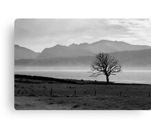 Isle Of Bute - The One Tree Canvas Print