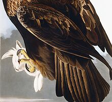 Golden Eagle by Bridgeman Art Library