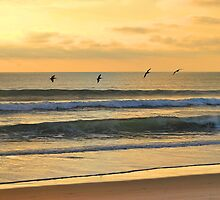 Seagulls In A Row by Sean Brett