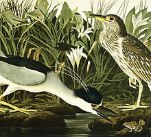 Night Heron or Lua Bird by Bridgeman Art Library