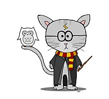 Harry Potter- Gizmo The Cat Photographic Print