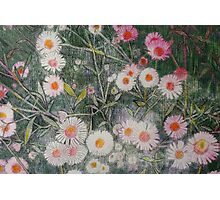 Touch of Pink Daisies Photographic Print