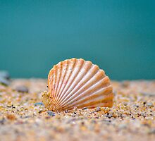 Shell by the Shore by dc42291