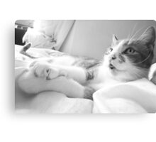 Laid-Back Cat Canvas Print