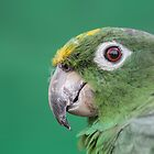 Green Parrot Close Up Photo by Pixie Copley LRPS
