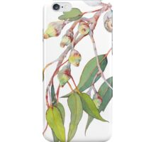 Australian native eucalyptus tree branch iPhone Case/Skin