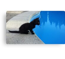 Pool kitten Canvas Print