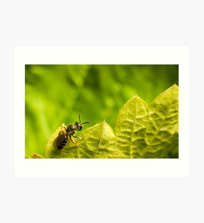small bee on top of strawberry plant leaf Art Print