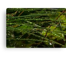 grass coverd with raindrops Canvas Print